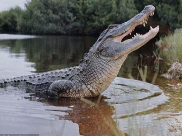 Mơ thấy cá sấu là điềm báo gì