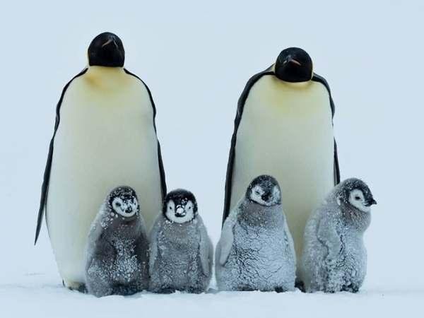 Mơ thấy chim cánh cụt là điềm gì