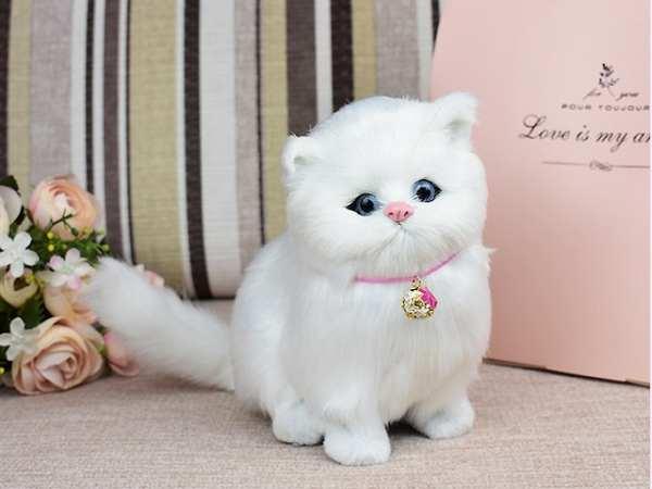 Nằm mơ thấy mèo trắng có ý nghĩa gì đặc biệt