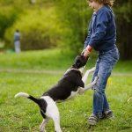 Nằm mơ thấy chó đuổi đánh con gì ? Là điềm hên hay xui ?